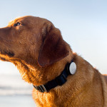 Whistle Acitivity Monitor : On-Collar Device To Track Your Dog's Activities