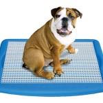 Wizdog Indoor Dog Potty : Plastic Indoor Housetraining System