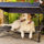 Quik Shade Outdoor Instant Pet Shade Features Elevated Mesh Bed and Foldable Frame