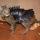 Cool Cat Battle Armor : War-Ready Leather Cat Costume
